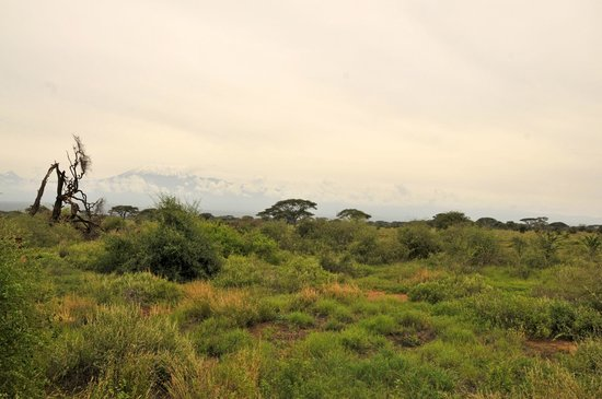 Kilima Safari Camp:                   kilimanjaro