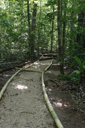Bosque del Cabo Rainforest Lodge:                   trail to the garden