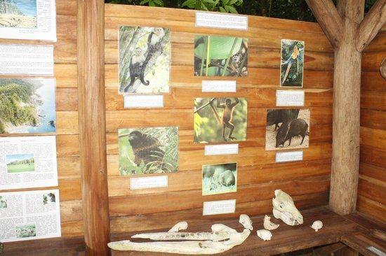 Bosque del Cabo Rainforest Lodge:                   study type room off bar