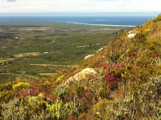 Grootbos Private Nature Reserve: panorama della riserva durante il tour in jeep