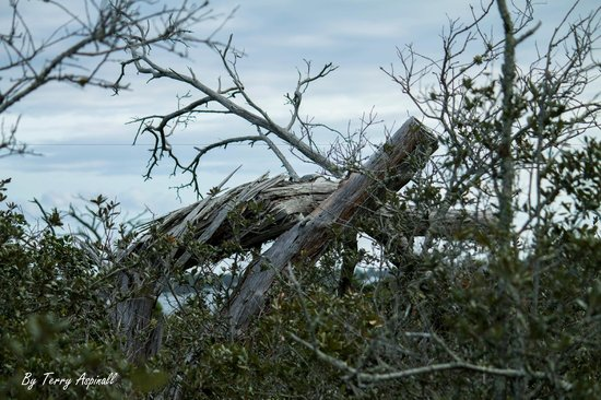 Hobe Sound Nature Center:                                     Interesting old tree down