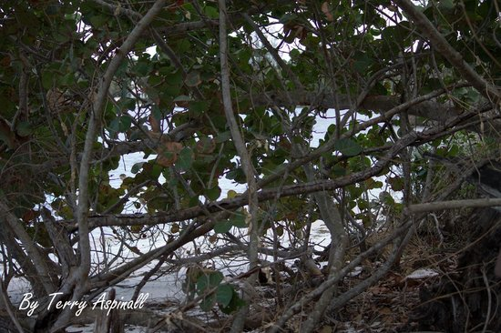 Hobe Sound Nature Center:                                     Looking at the water way