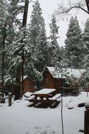 Evergreen Lodge at Yosemite:                   Snowfall overnight