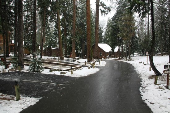 Evergreen Lodge at Yosemite:                   Road through property