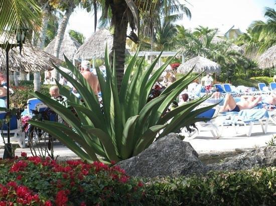 Melia Cayo Santa Maria:                   aloe vera plant near pool....wow !