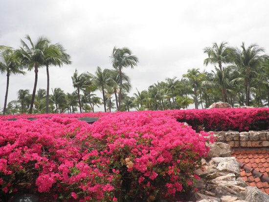 حياة ريجنسي أروبا ريزورت آند كازينو:                   Beautiful flowers                 