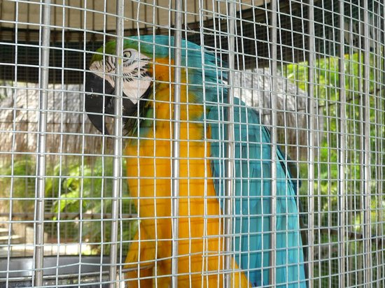 Hyatt Regency Aruba Resort and Casino:                   Exotic bird on property