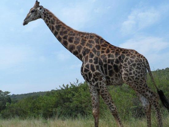 Jock Safari Lodge:                   Game drive