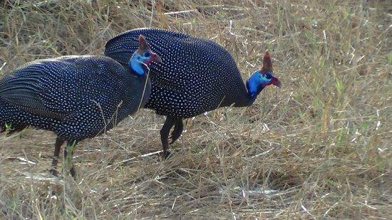 Ndololo Camp:                   a spasso nella savana