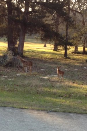 New Ulm, TX: Deer on course