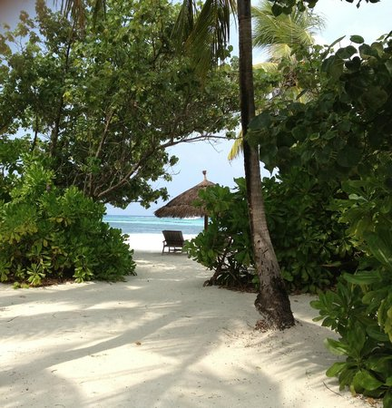 Four Seasons Resort Maldives at Kuda Huraa:                   My view from the end of the foliage in my private yard.