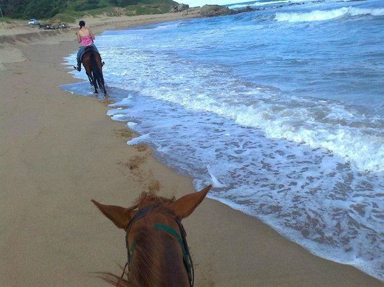 Horseback Beach Adventures:                   Right up in the waves
