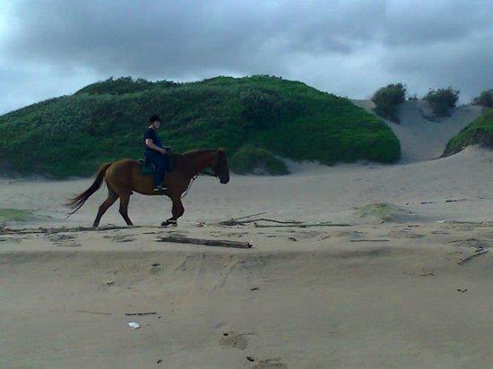 Horseback Beach Rides:                   Beach ride