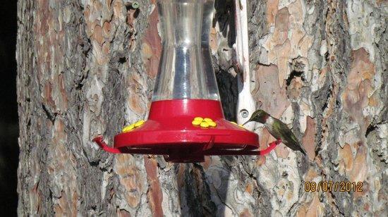 Charlton Lake Camp:                   lots and lots of hummingbird feeders