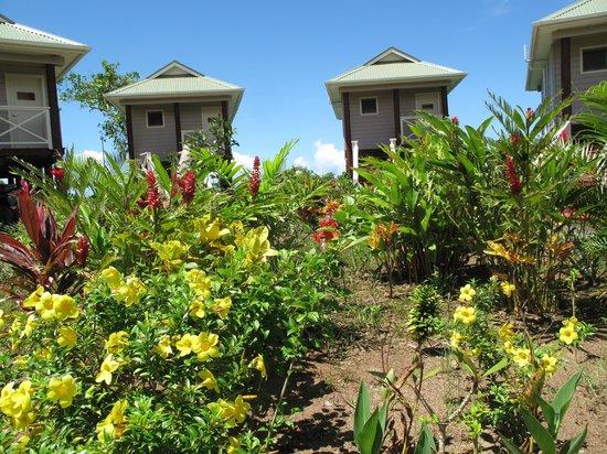 Salani Surf Resort :                   Fales