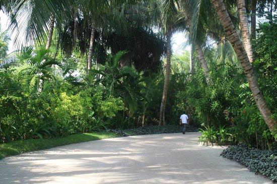 Kuramathi Island Resort: gardens