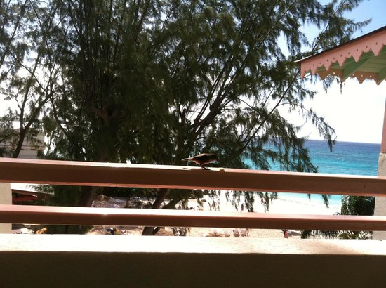 Bougainvillea Barbados:                   This little bird was our regular balcony breakfast guest.