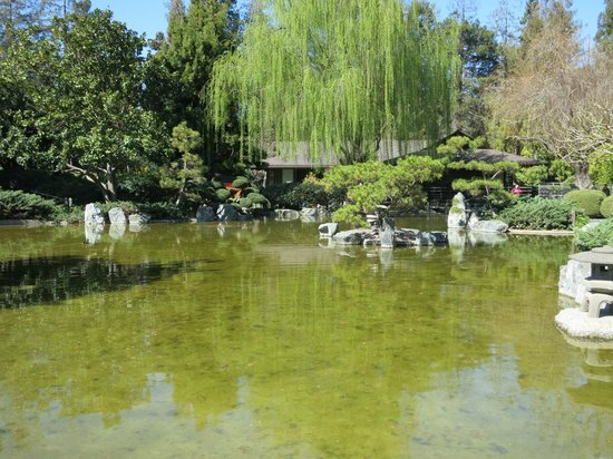 koi pond in the japanese garden picture of happy hollow
