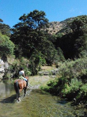 Patuna Farm Adventures :                   river valley riding