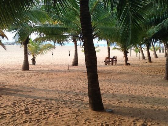 Jetwing Blue:                   allée de palmiers devant l'hôtel