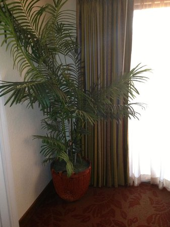Floridays Resort Orlando:                   Decor