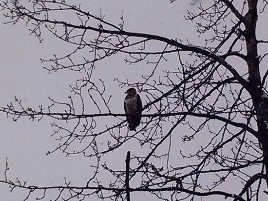 Hotel Alyeska: Eaglet near to hotel