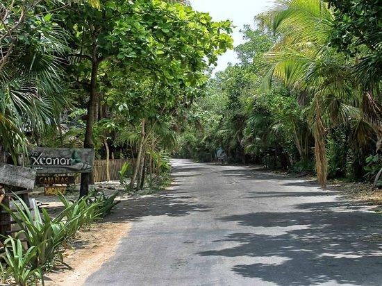 Nueva Vida de Ramiro: The main road in Tulum