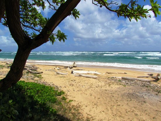 Sheraton Kauai Resort: Lydgate Beach Park - Ashort drive on the East Shore