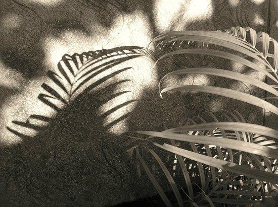 Paya Bay Resort: Sepia-toned palm fronds