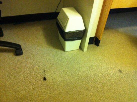 Novotel Sydney Central: Cigarette burns on the carpet