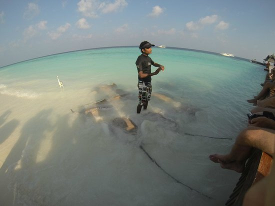 "Angsana Ihuru, Maldives:                   sting rays on neighbouring island ""Banyan Tree"""