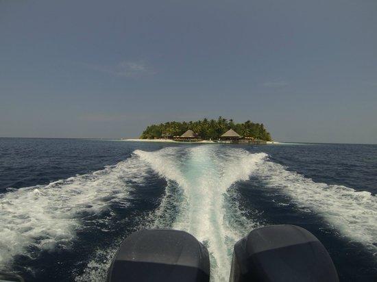 Angsana Ihuru, Maldives:                   bye bye for now