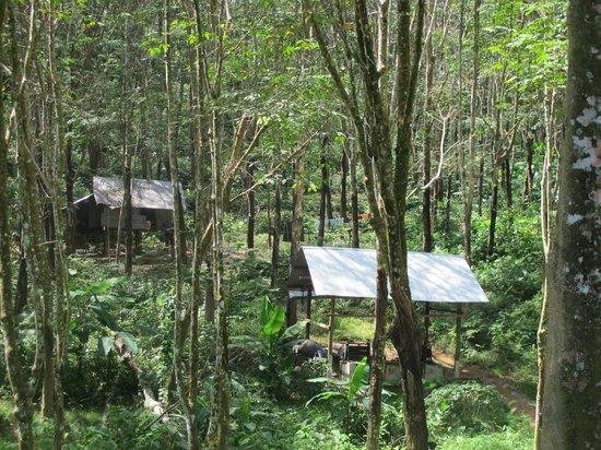 Koh Yao Beach Bungalows: rubber plantation