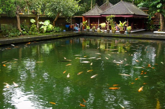 Koi pond at a large buddhist temple picture of sila 39 s for Large koi pond