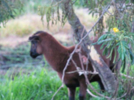 Hacienda Manteles:                                     another fur baby