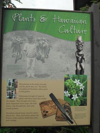 Amy B.H. Greenwell Ethnobotanical Garden : Amy B.H.Greenwell gardens