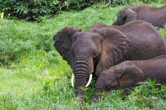 Full-Day Lake Manyara National Park Tour:                   Elephant in Lake Manyara