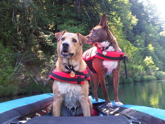 Russian River Adventures (SOAR Inflatables) :                   Our dogs in the canoe on the Russian River