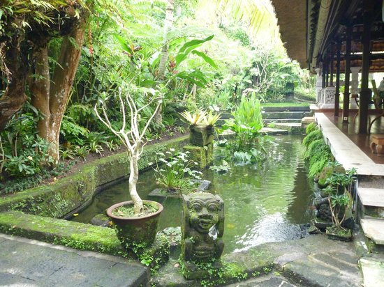 Warwick Ibah Luxury Villas & Spa: Pond behind lobby full of Koy fish.