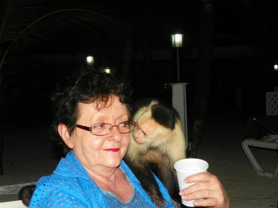 Fantasy Island Beach Resort:                   Monkey checking me out! He licked my face