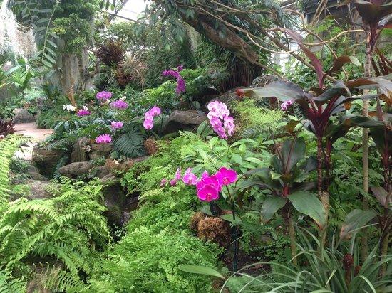 Los Angeles County Arboretum U0026 Botanic Garden: Orchid Greenhouse