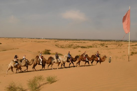 Inner Mongolia, China:                   bubuqi gobi desert camel ridding activities