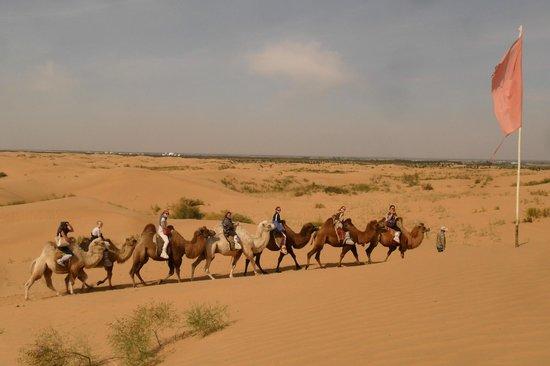 Indre Mongolia, Kina:                   bubuqi gobi desert camel ridding activities