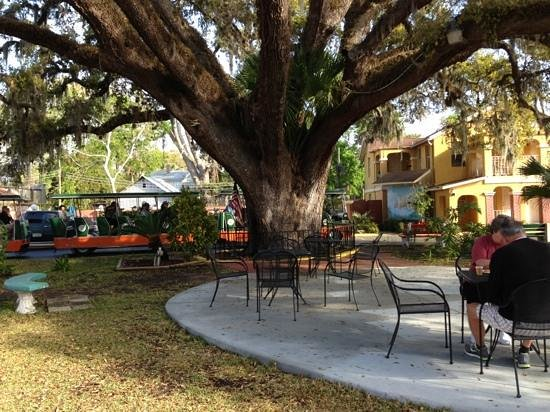 Howard Johnson Inn - Historic ST. Augustine FL: Live Oak tree at the HoJo