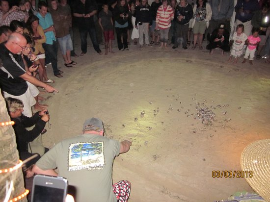 Bananarama Beach and Dive Resort:                   Crab Races!!!