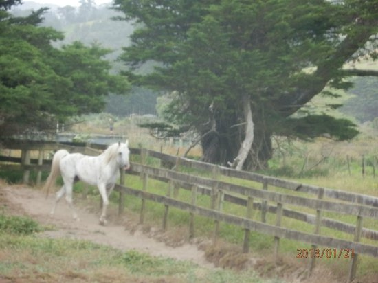 Pakiri Beach Horse Rides - Day Tours:                   Good morning neighbour!