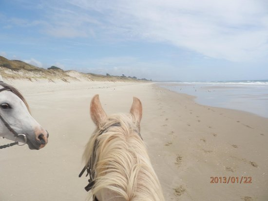 Pakiri Beach Horse Rides - Day Tours:                   Pakiri Beach