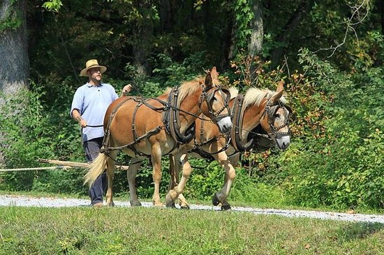 Johnston Farm & Indian Agency: Driving mules