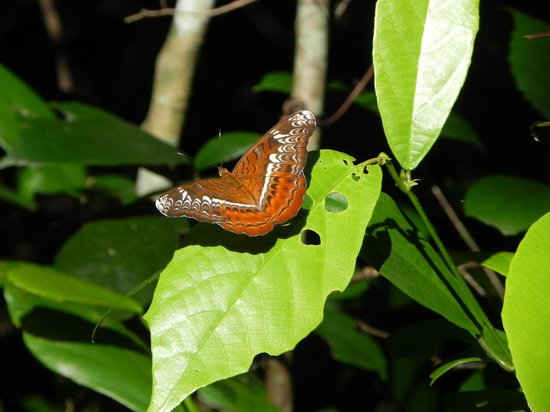 Tura, India:                   Butterfly haven