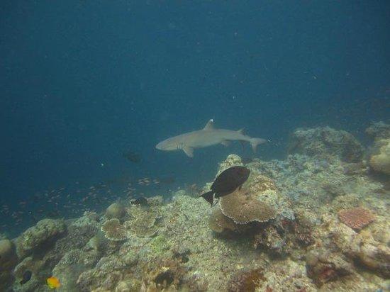 Dive The World:                   sipadan6